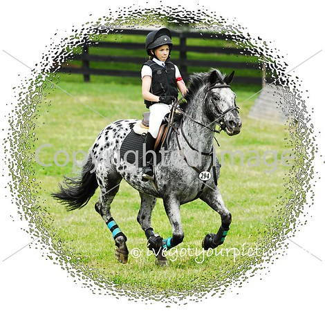 Theme:  Black and White<br /> A Black-and-White Pony!<br /> Flying Cross Farm, 2015