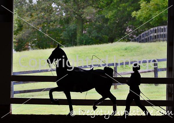 Theme:  Framed<br /> Wingswept Farm<br /> Nicholasville, Kentucky<br /> September 2017
