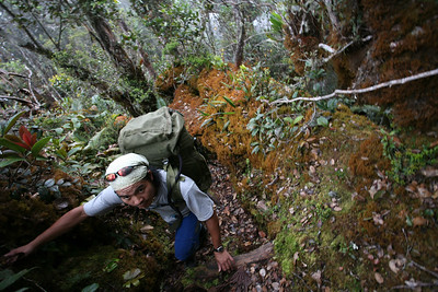 Sabah, Malaysia, jungle trekking, Mount Trusmadi