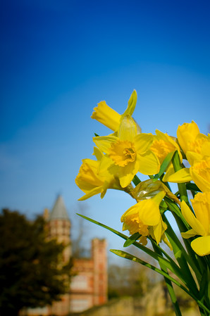 Springtime at Saltwell Towers