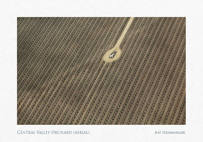 Central Valley Orchard (aerial)