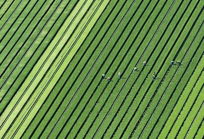 Aerial (crop)