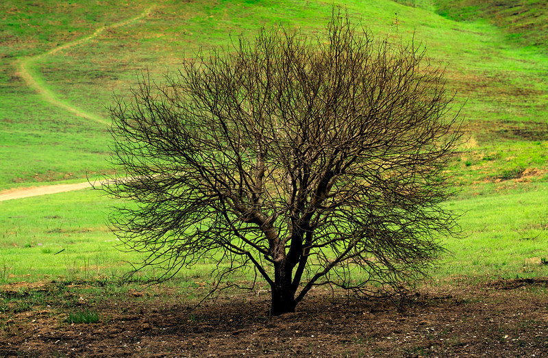 Small Tree in the Park, Scorched