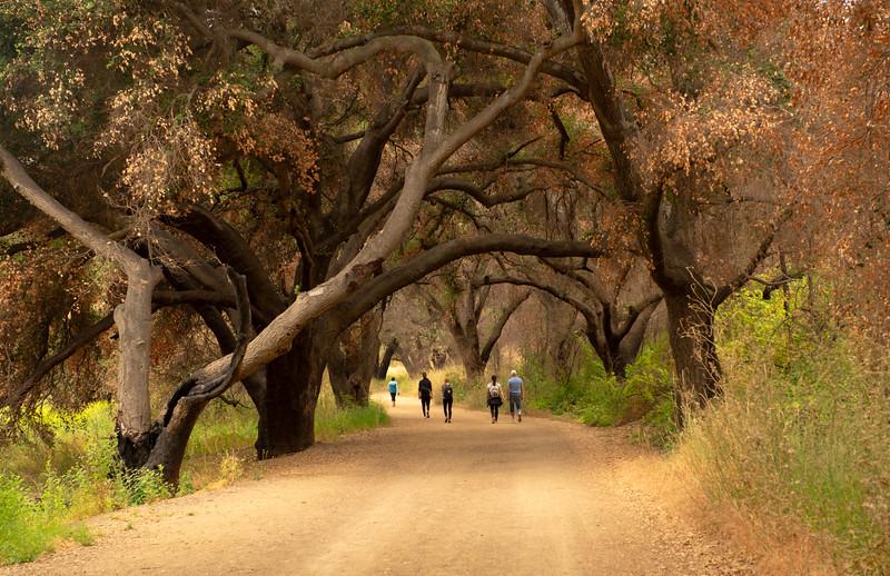 Resilient Oaks Inside the Park, June 22