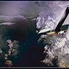 """GLOBAL HAWK DRONE THROUGH THE STORM"""