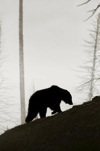 Listening to bear.