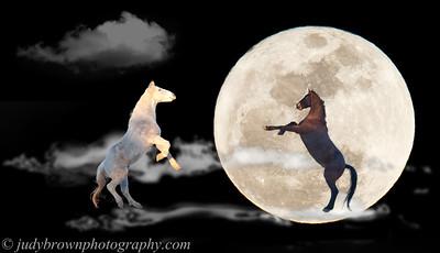 horseInMoon_7112 copy
