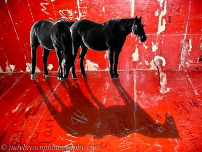 WSR-horses-in-a-TX-restroom-1100721