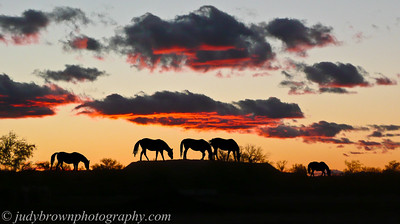 WSR-sunset-with-KY-horses-1100420
