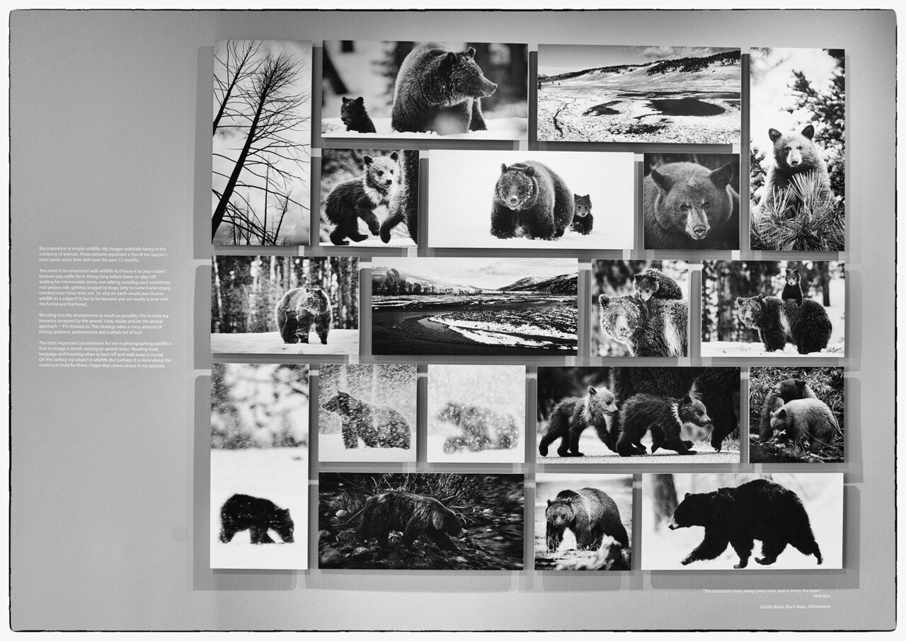 Bear grid
