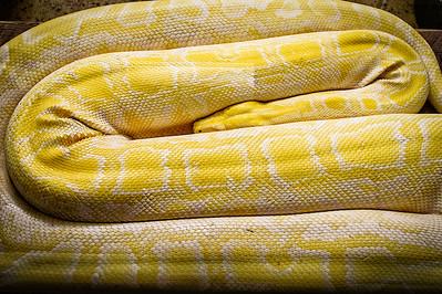 Python, Cheyenne Mountain Zoo, Colorado Springs, Colorado