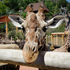 Goofy Giraffe, Cheyenne Mountain Zoo, Colorado Springs, Colorado