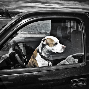 Waiting Dog, Capitola, California