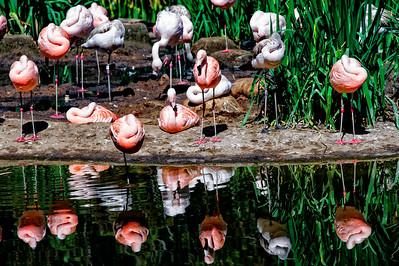 Flamingo Mirror
