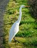 Heron, Coyote Hills Regional Park, Fremont, California