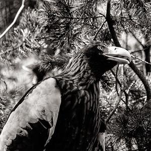 San Diego Zoo - April 2013