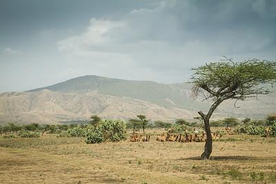 Camel refuge