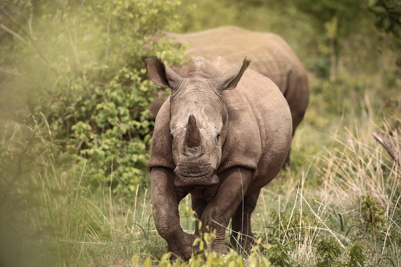 Smiley Rhino