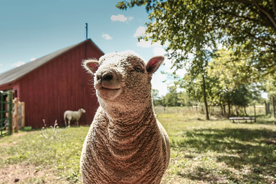 soulspace, farm, sanctuary, wisconsin, animal, rescue, vegan