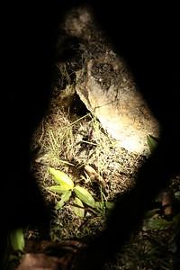 Tarantula In Nest