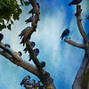 { pigeon tree }