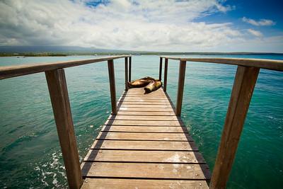{ a sea lion's life }