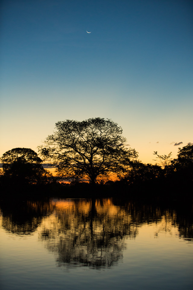 brazil: the jungles of pantanal