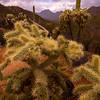 Tucson Mountains during monsoon season, Sonoran Desert, Arizona