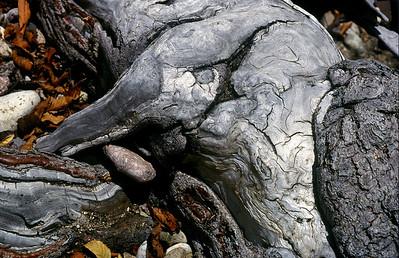 Elefante corteza