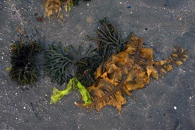 Composición alga