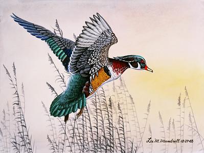 Wood Duck Study Watercolor - Illustration Board