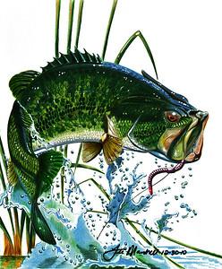 Largemouth Bass Colored Pencils - Illustration Board