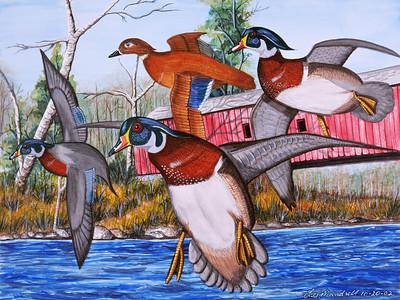 Cataract Falls Wood Ducks Watercolor - Illustration Board
