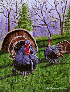 Toms in Strut Watercolor - Illustration Board