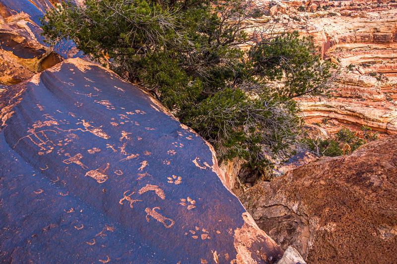 Basketmaker petroglyphs featuring animal tracks and anthropomorphic (human-like) figures, canyon overlook, Bears Ears National Monument and environs, San Juan County,  Utah
