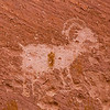 Sheep petroglyph, Kachina Bridge, Natural Bridges National Monument, San Juan County, Arizona