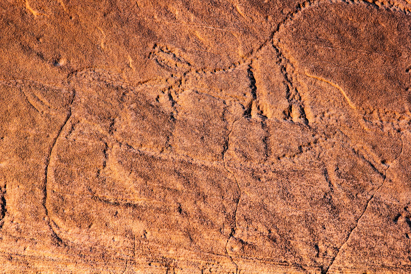 Closeup of possible Columbian mammoth and Bison antiquus petroglyphs , Bears Ears National Monument and environs, San Juan County, Utah