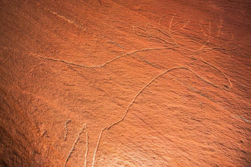 Historic Native American deer petroglyph,  Bears Ears National Monument and environs, San Juan County, Utah