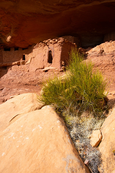 Moonhouse, Ancestral Pueblo structures, Bears Ears National Monument, San Juan County, Utah