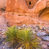 Ancestral Pueblo structure and yucca sp. , Bears Ears National Monument and environs, San Juan County, Utah