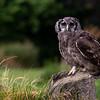 Hawk Conservancy shoot 10-9-21