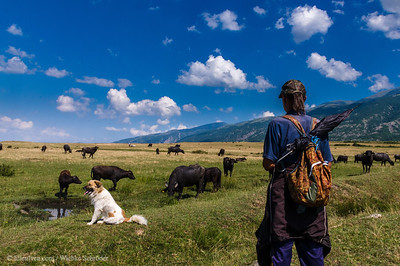 Buffalo herder - traditional lifestyle in Bulgaria