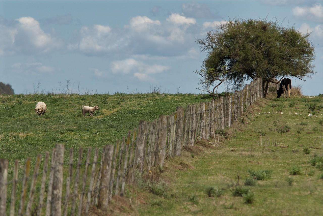 Campo argentino 2