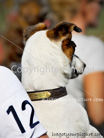 Tradition:<br /> Dogs at Horse Shows