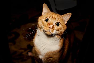 cozzetto_cats-16