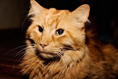 cozzetto_cats-17