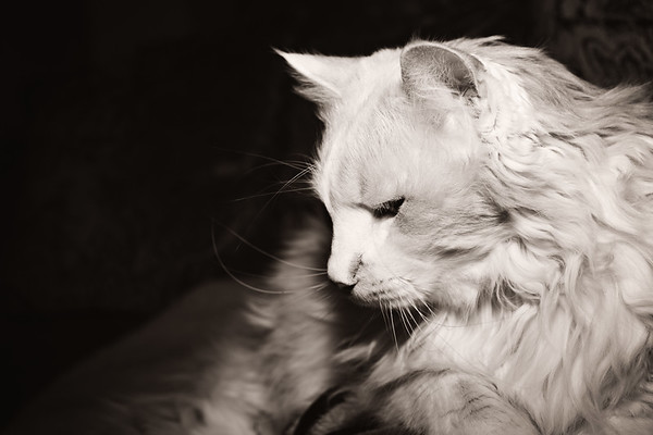 cozzetto_cats-13