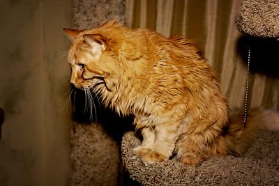 cozzetto_cats-6