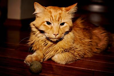 cozzetto_cats-15