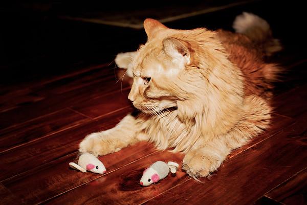 cozzetto_cats-3